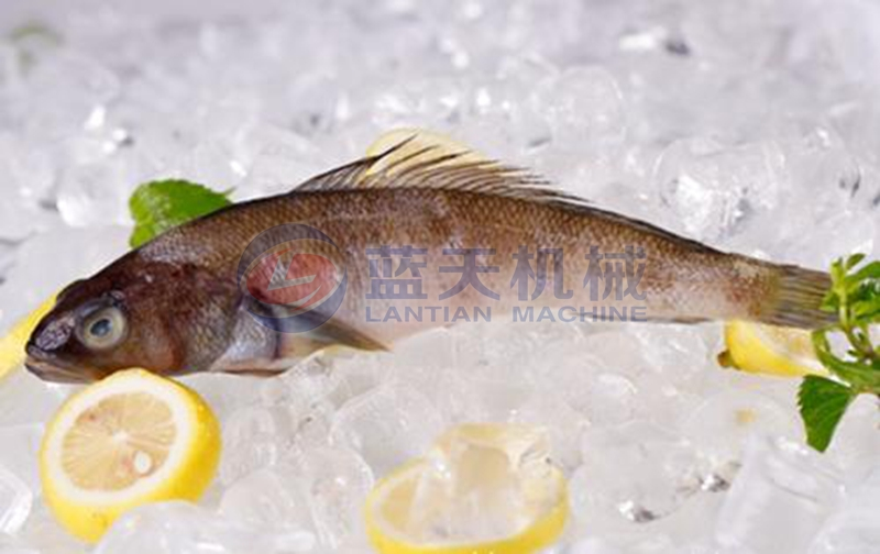 fish cold storage freezing effect